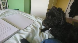 My dog 'helping' me work