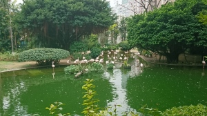 Lake in Kowloon Park