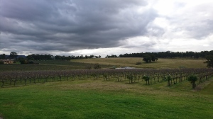 Vineyards at a Hunter Valley Winery