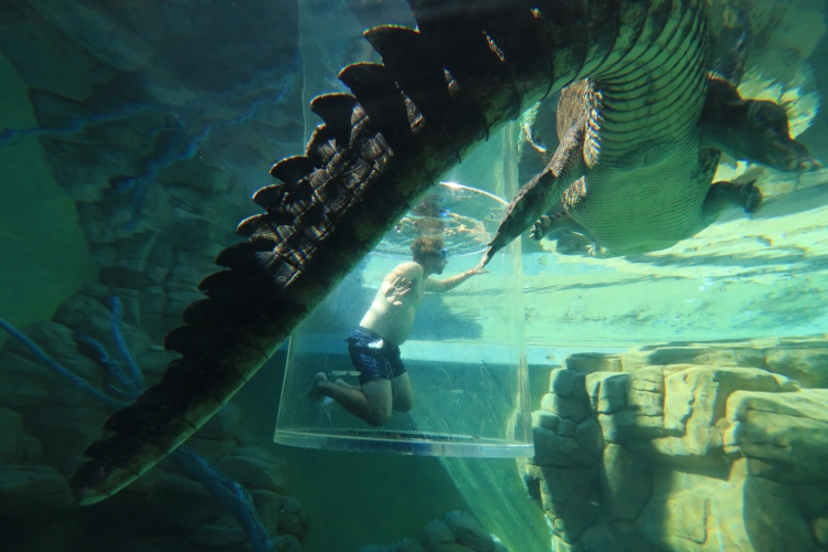 The Cage of Death at Crocosaurus Cove