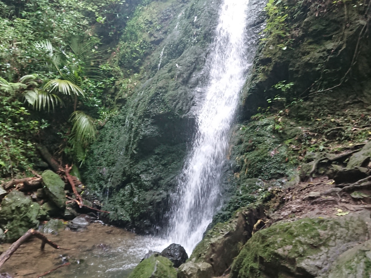 The Waterfall at the Percy Scenic Reserve in Petone