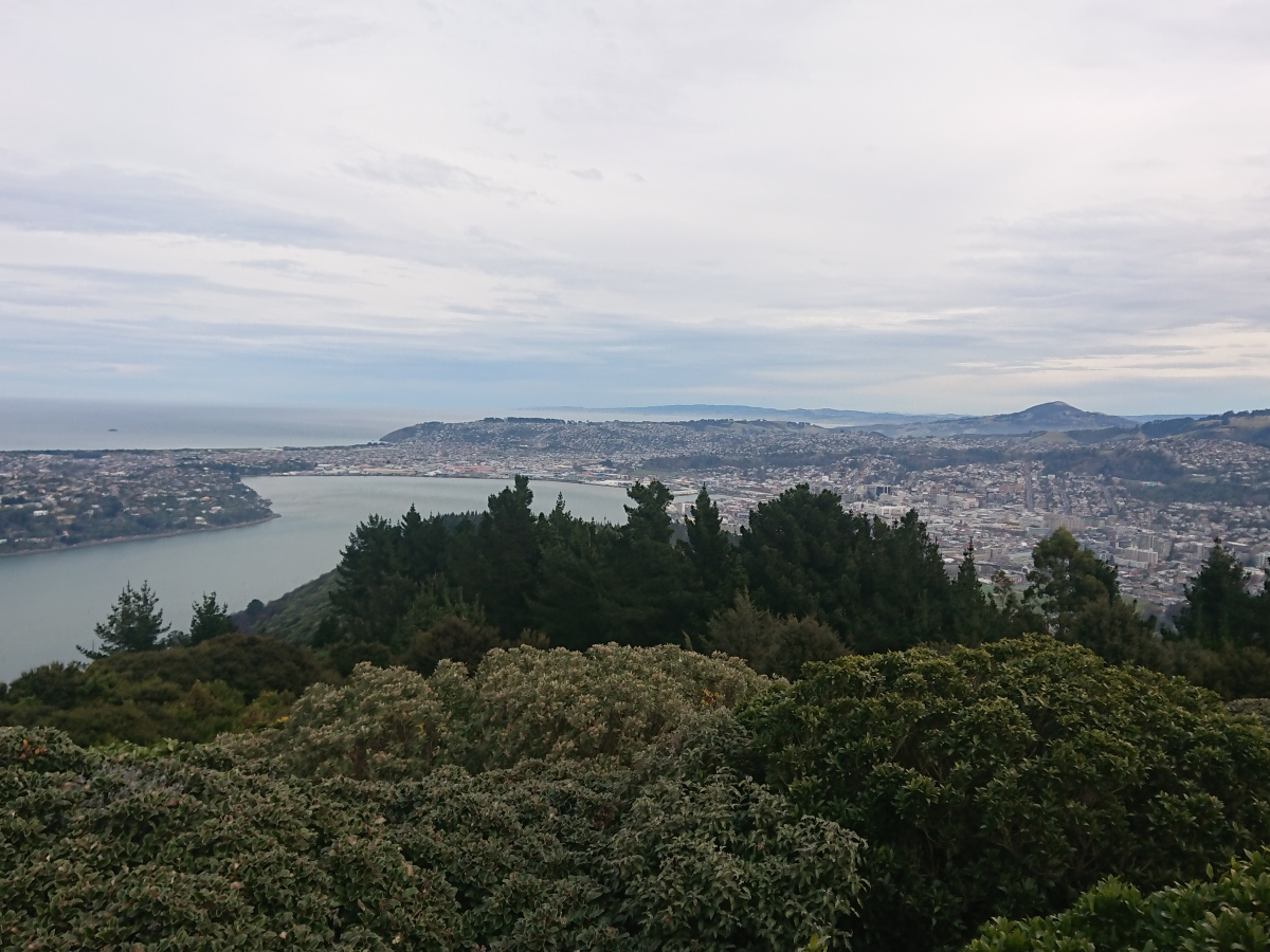 Dunedin from Signal Hill Lookout