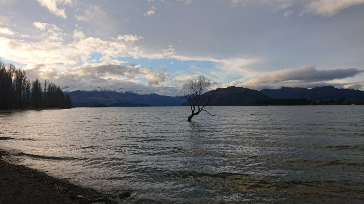 The famous Wanaka Tree