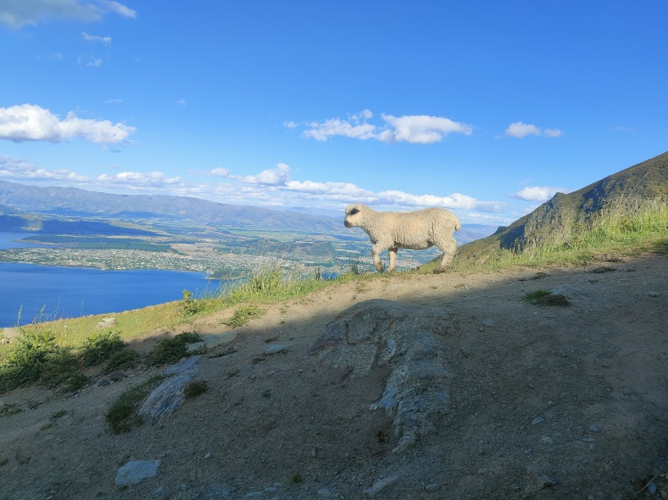 A lamb against the sky on Roy's Peak