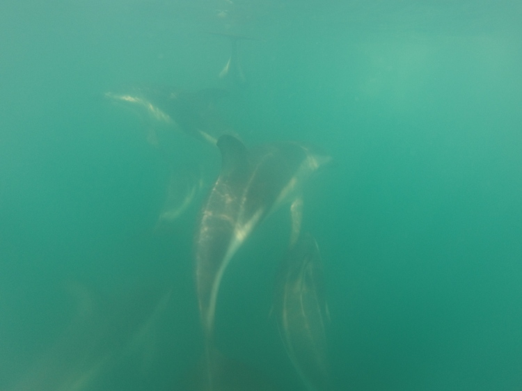 A shot of how close the dolphins get underwater