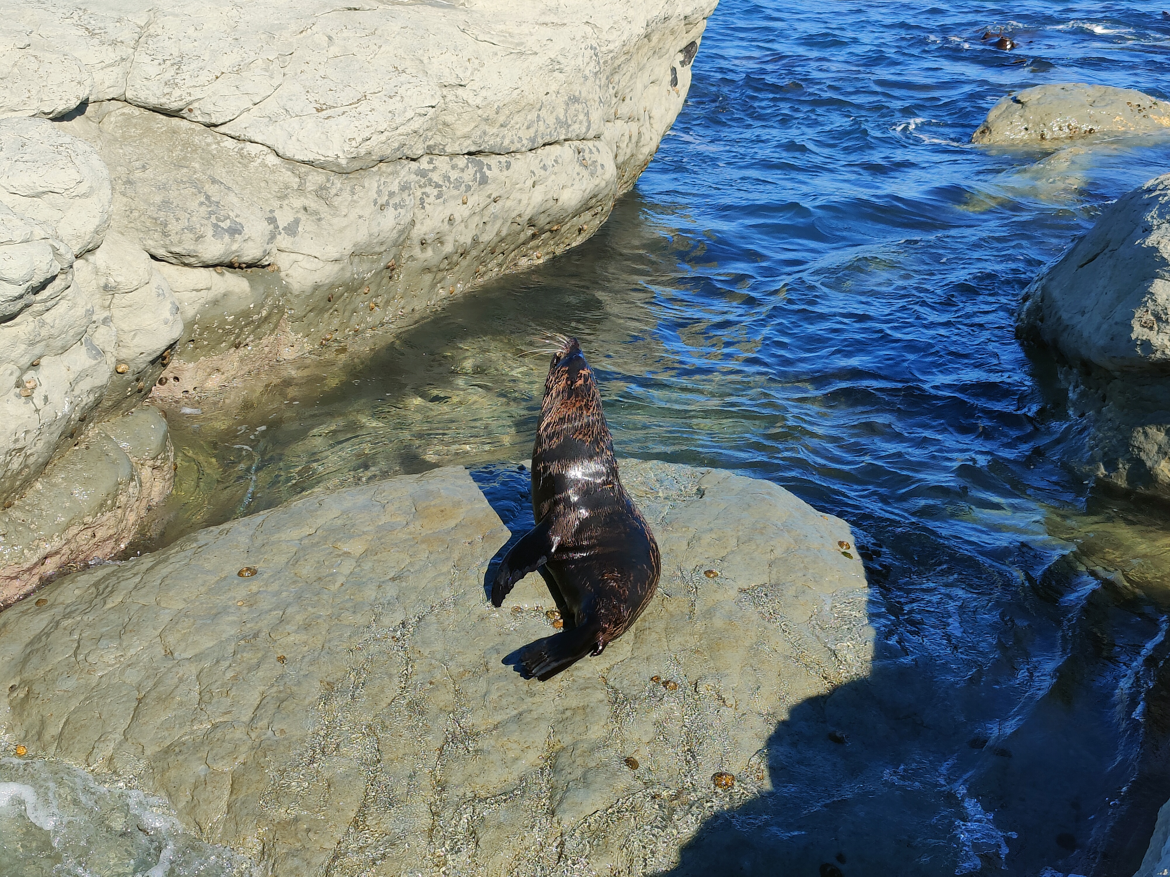 A seal stretches in the sun