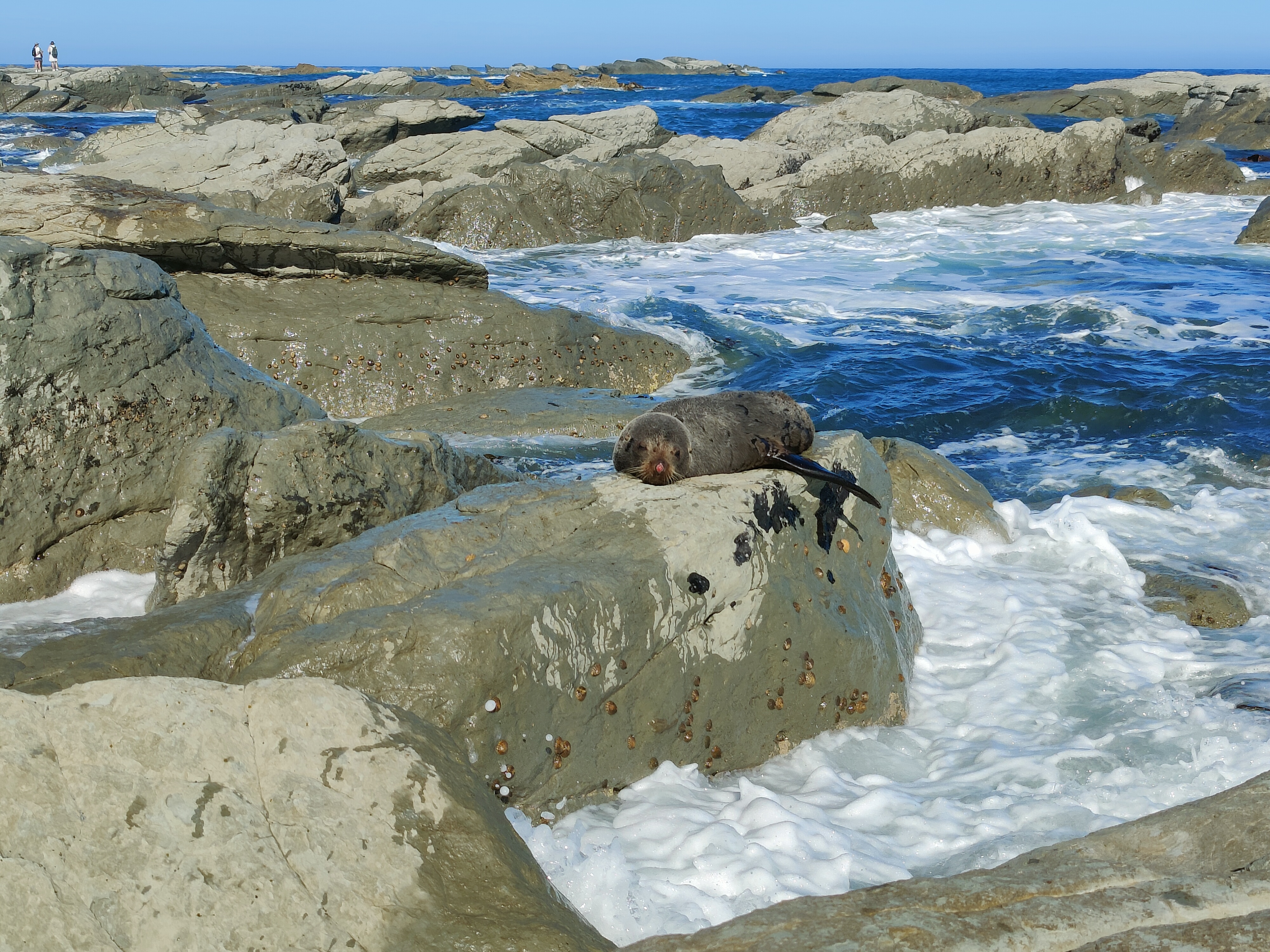 A seal dozing in the sun