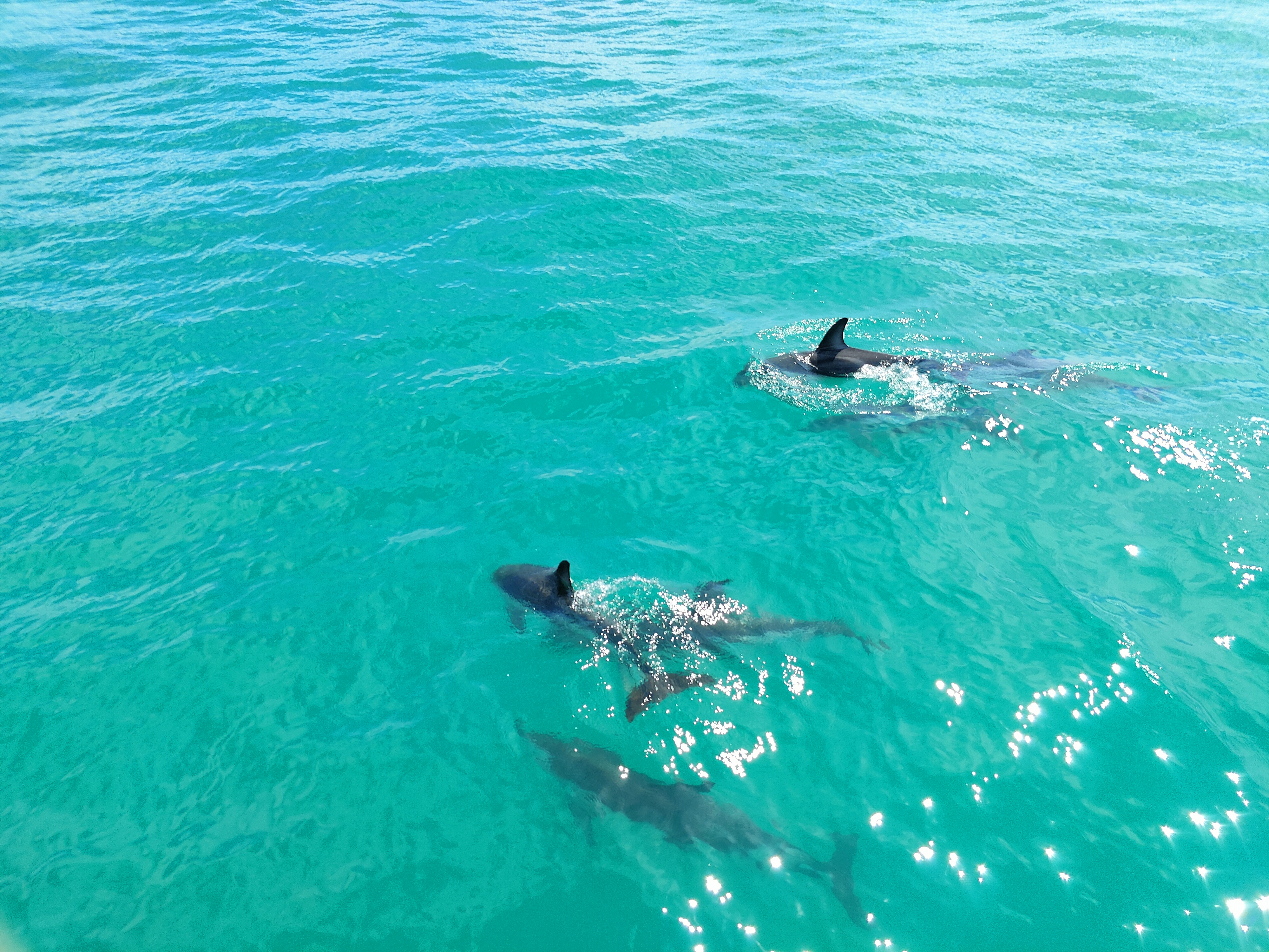 Dolphins playing next to our boat