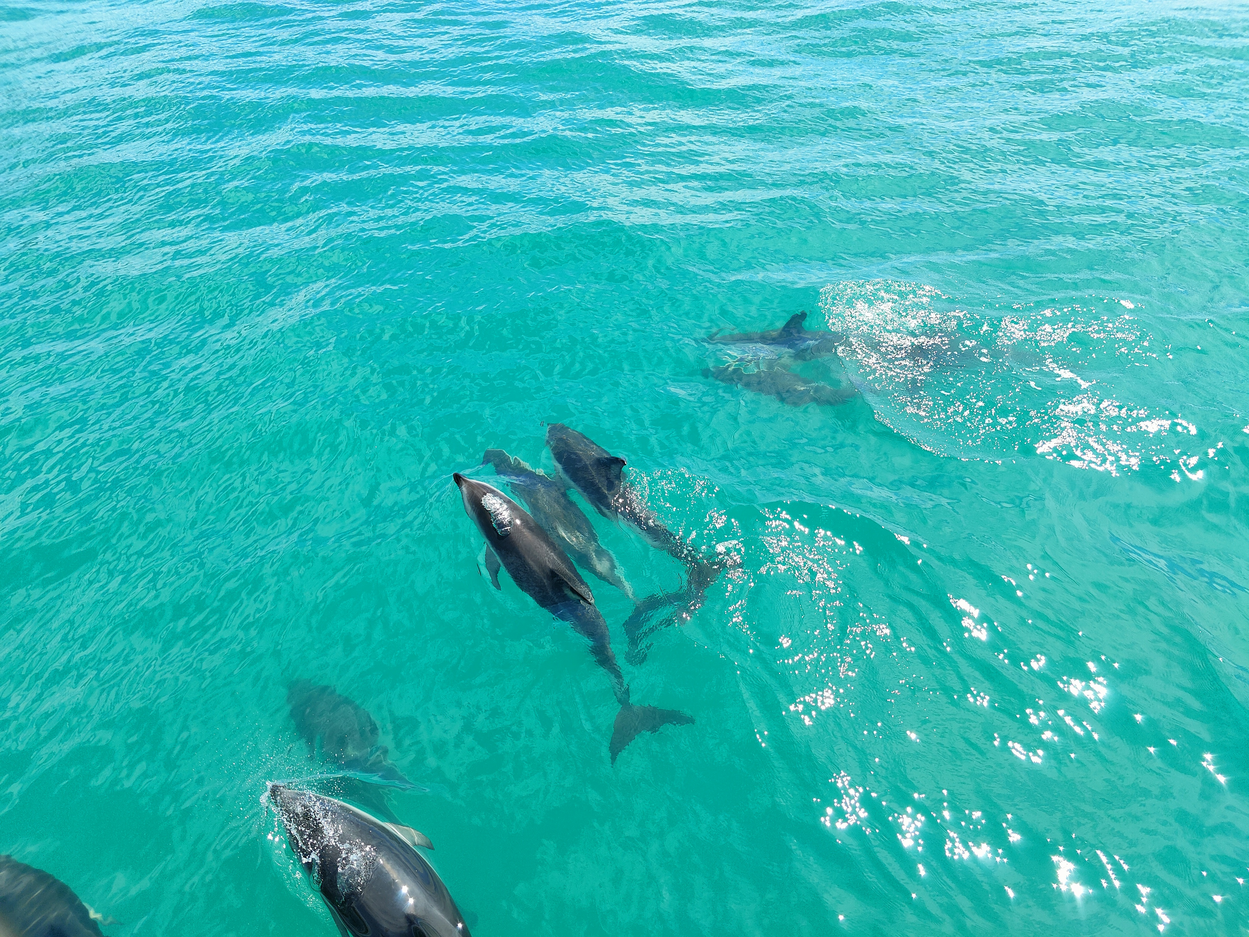 Dolphins swimming in a line