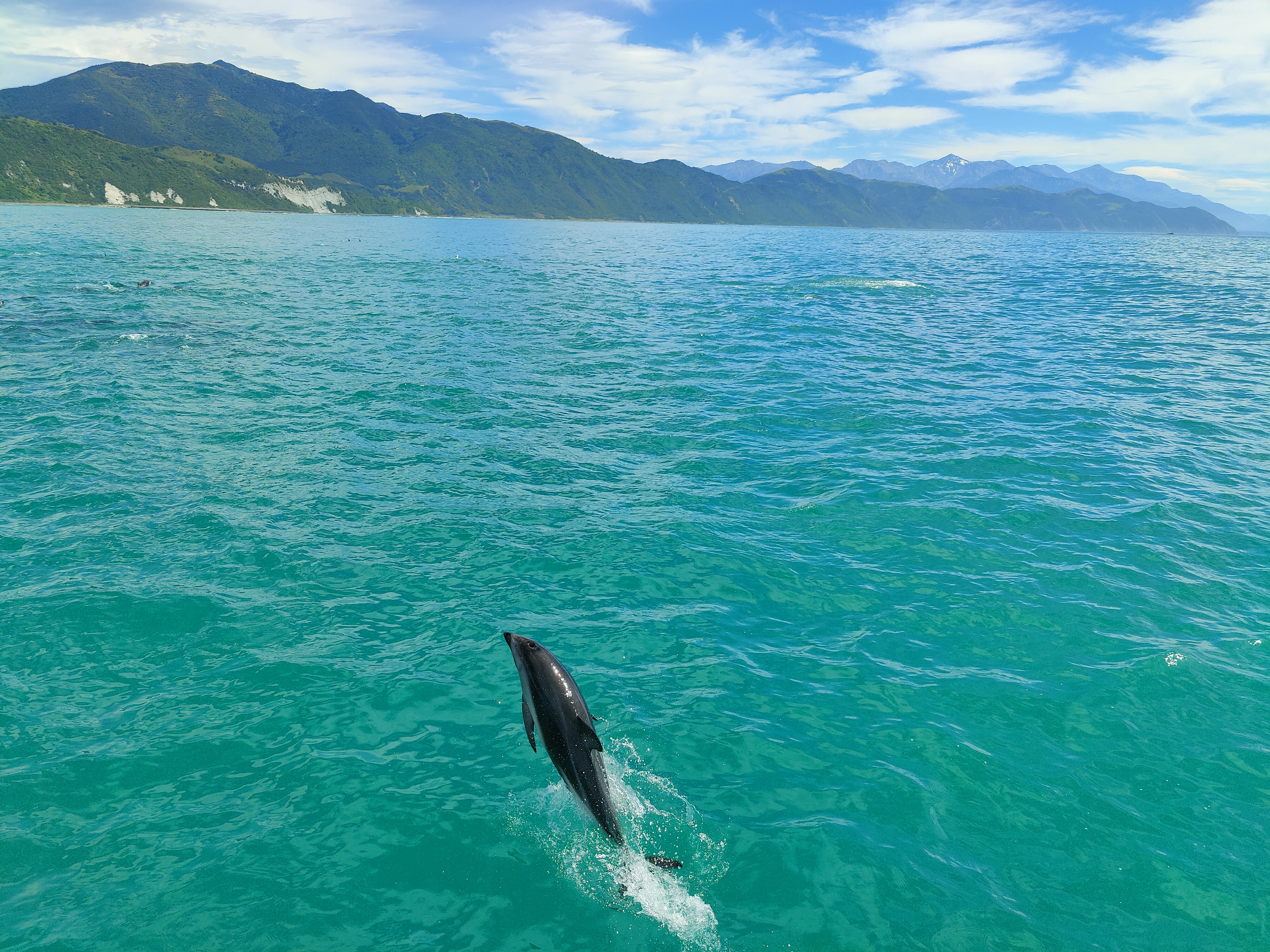 A dolphin jumping from the water