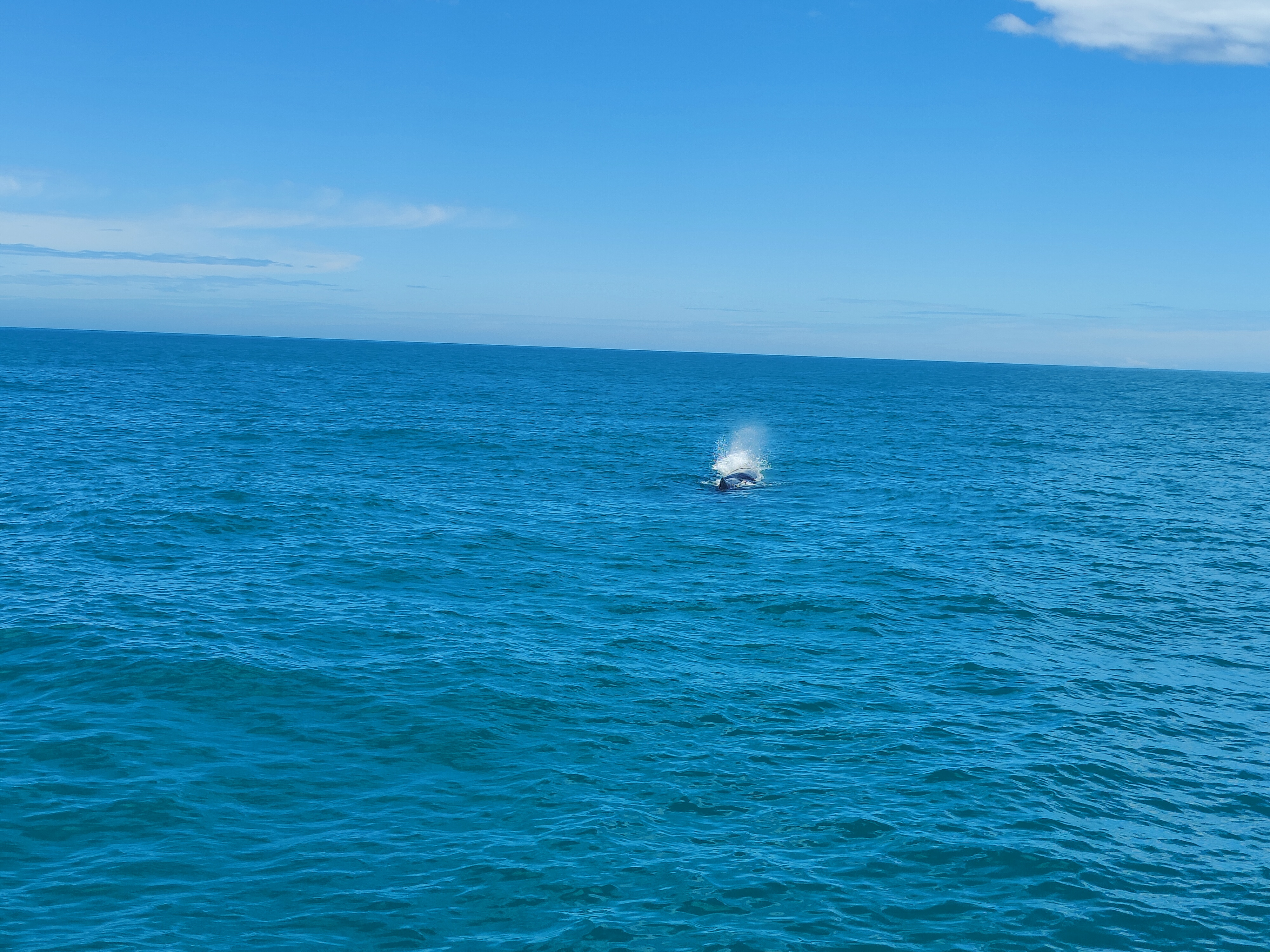 Our sperm whale taking a breather