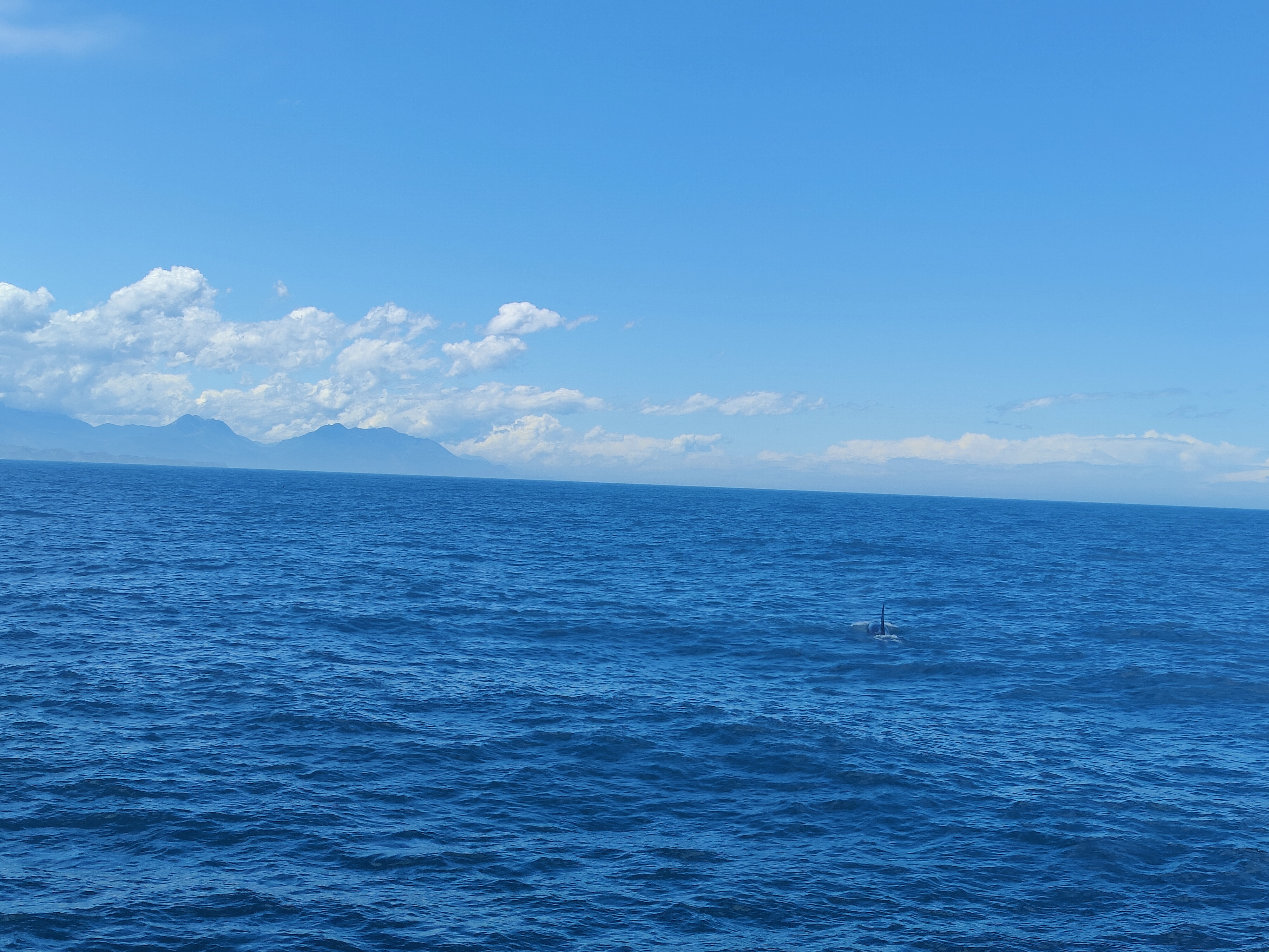 One of the orca we found on the tour