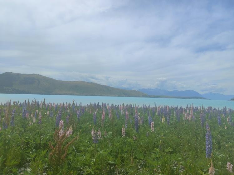 Lake Tekapo on the way to Pine Beach
