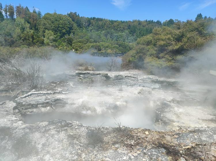Steam from the geothermal walkway in Whakarewarewa Village