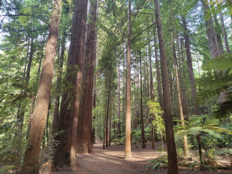 The Rotorua Redwoods