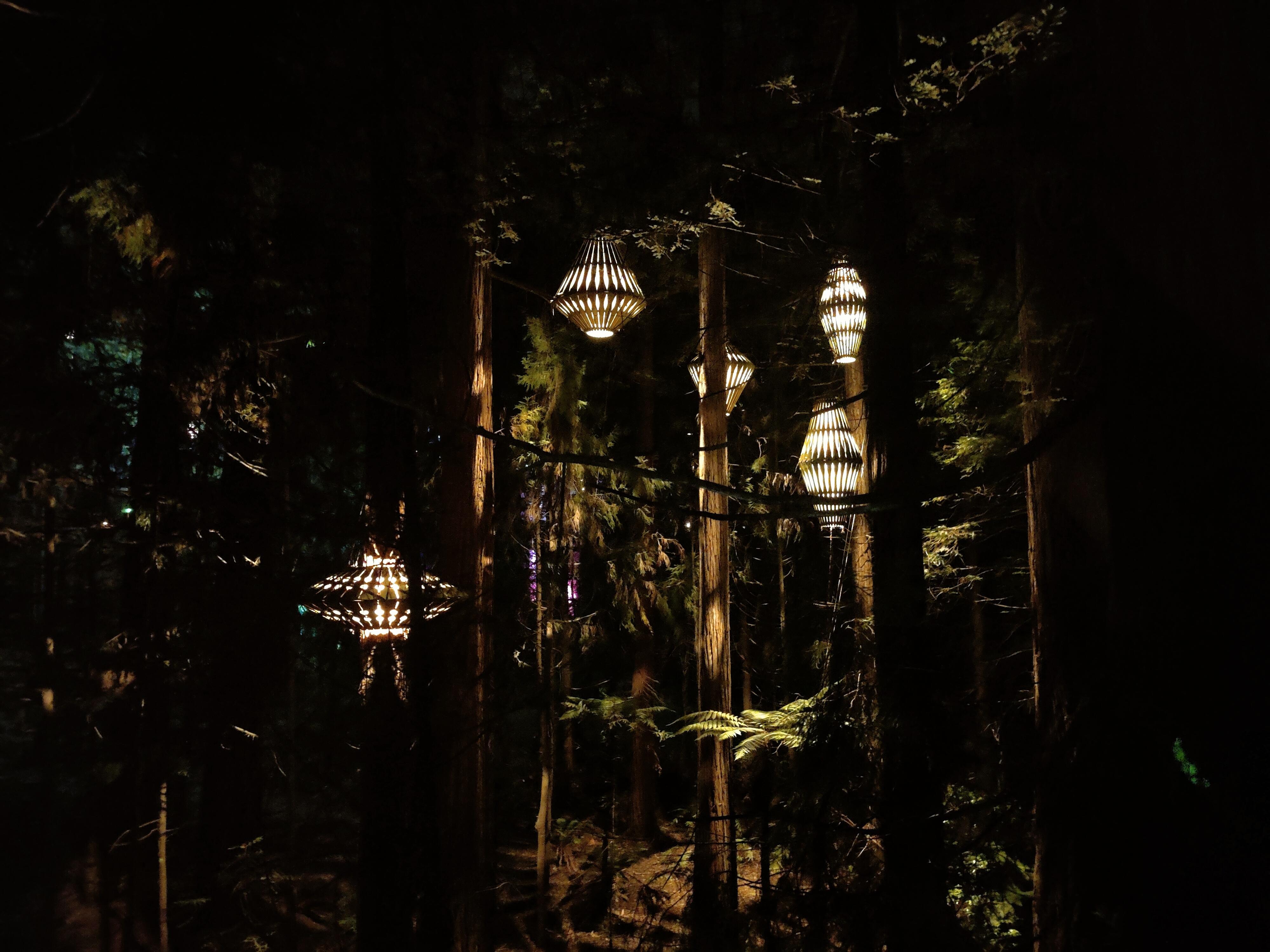 Lanterns on the Rotorua Redwoods Treewalk at night