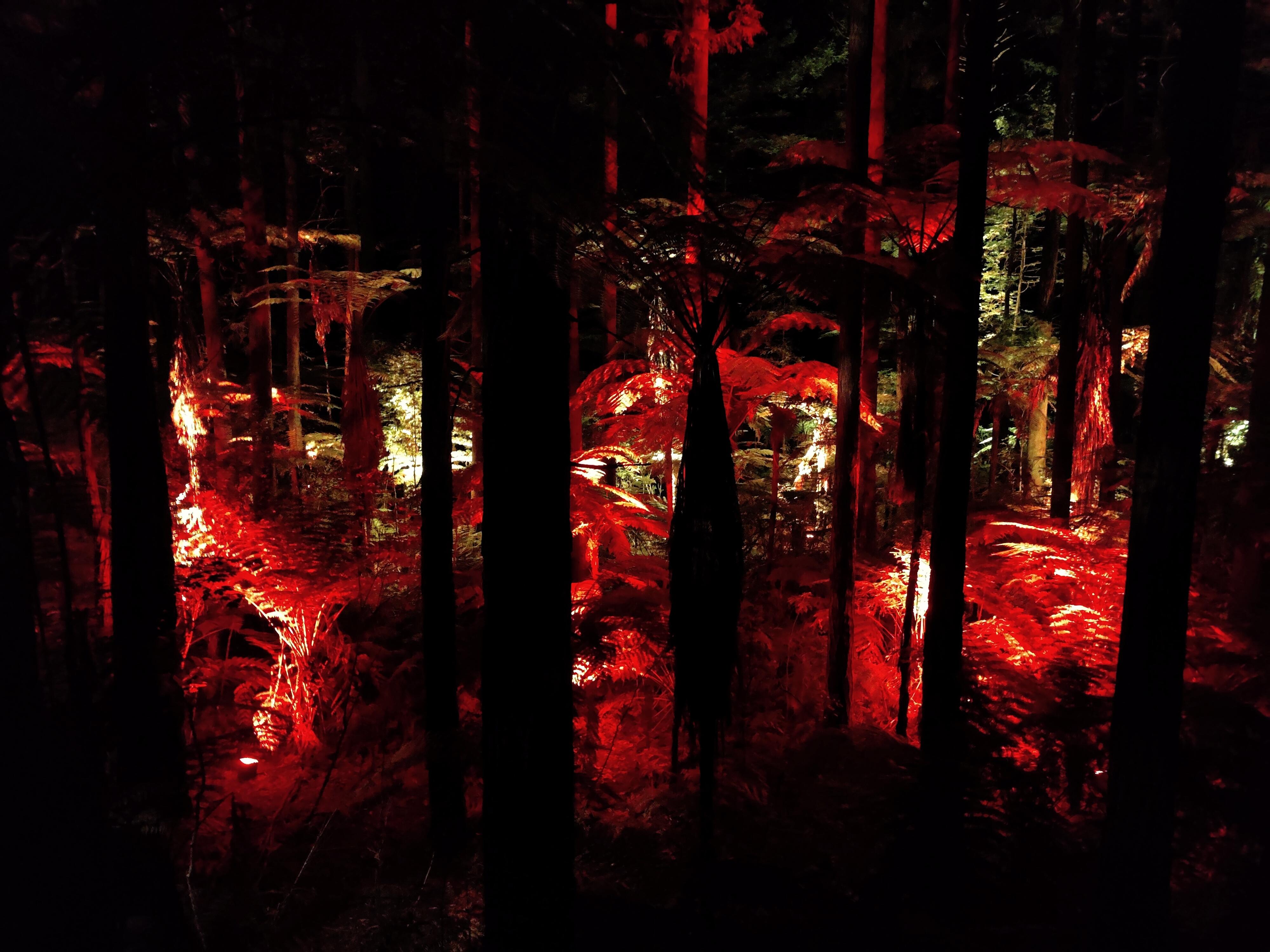 Changing lights from the Rotorua Redwoods Treewalk at night