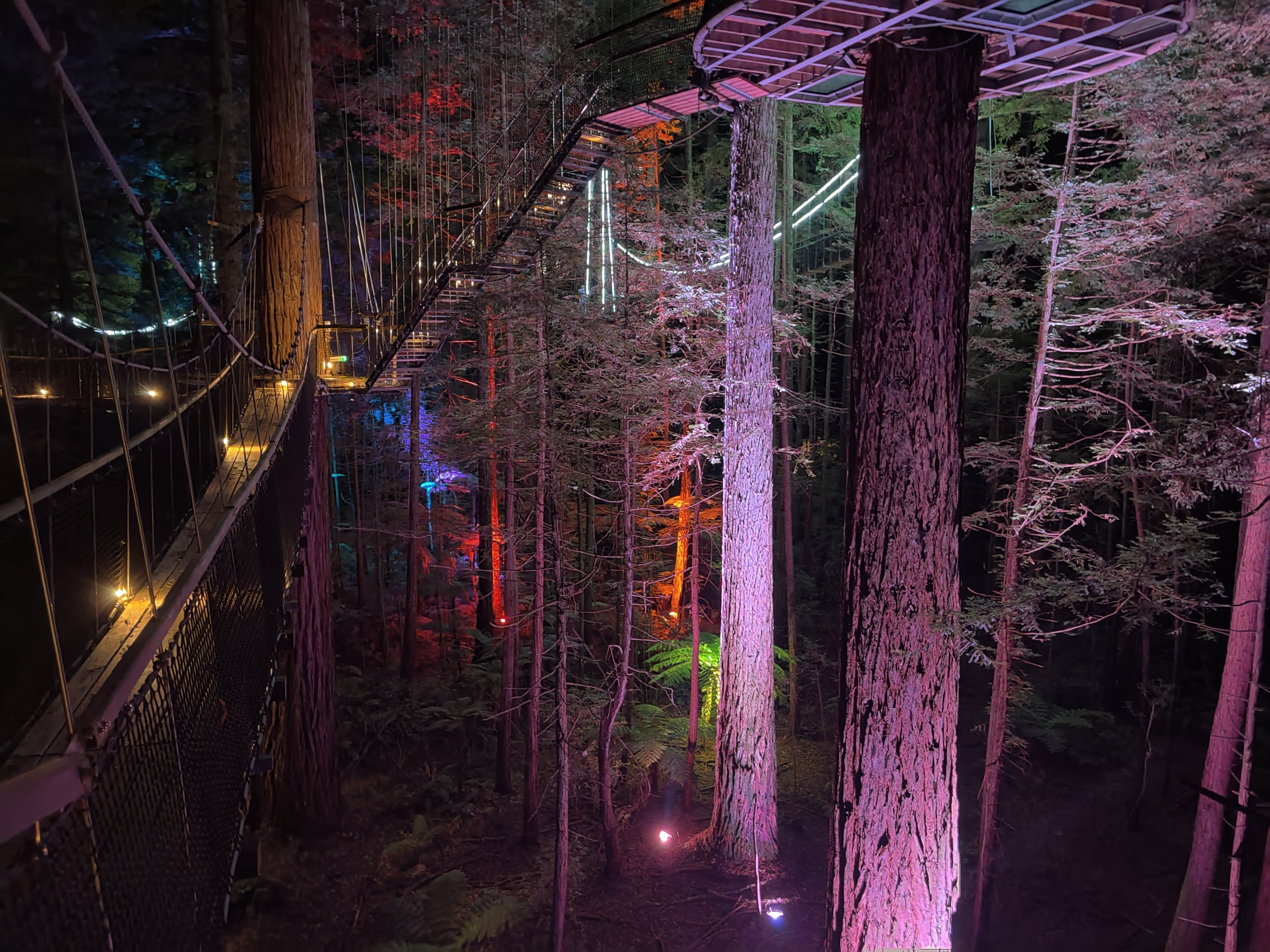 A stunning view of the Rotorua Redwoods Treewalk at night