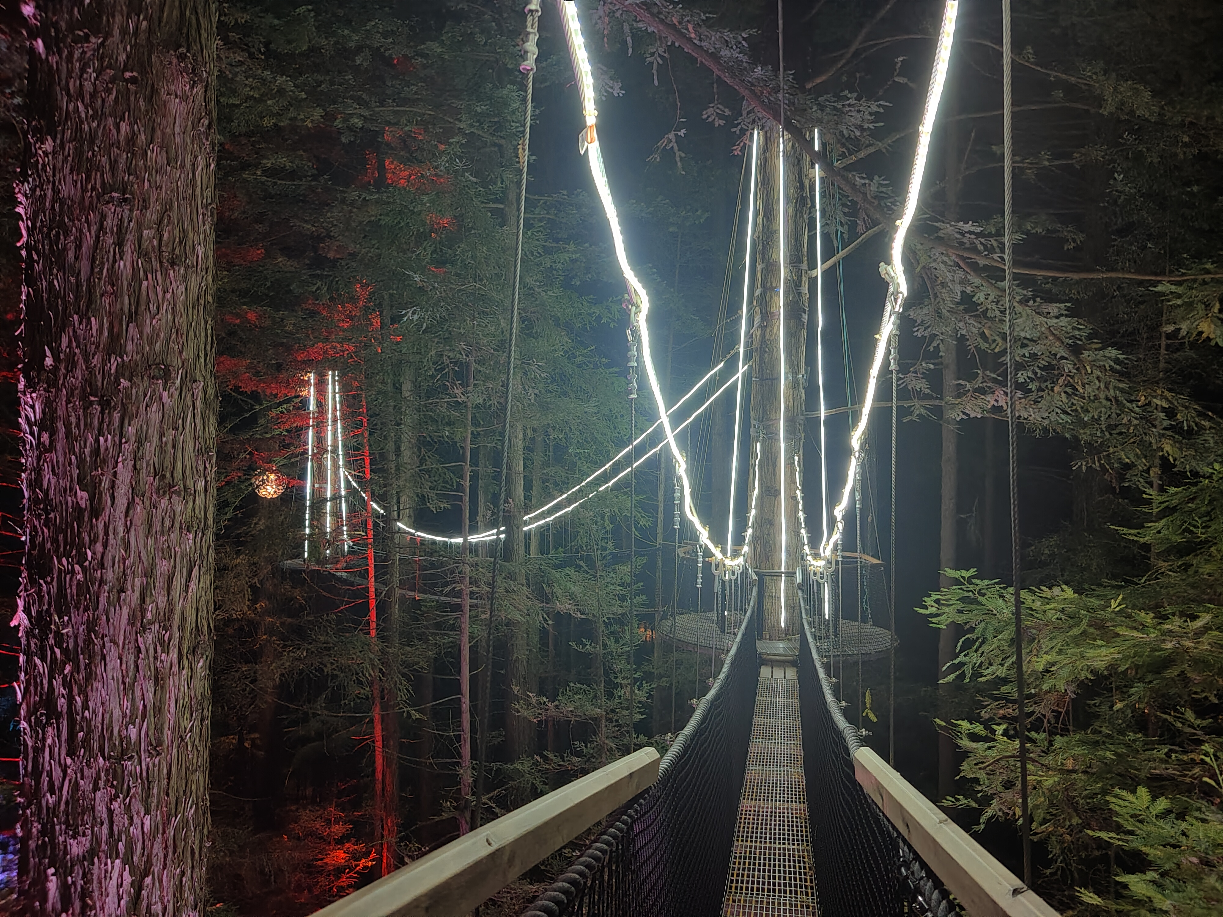 A bridge on the Rotorua Redwoods Treewalk at night