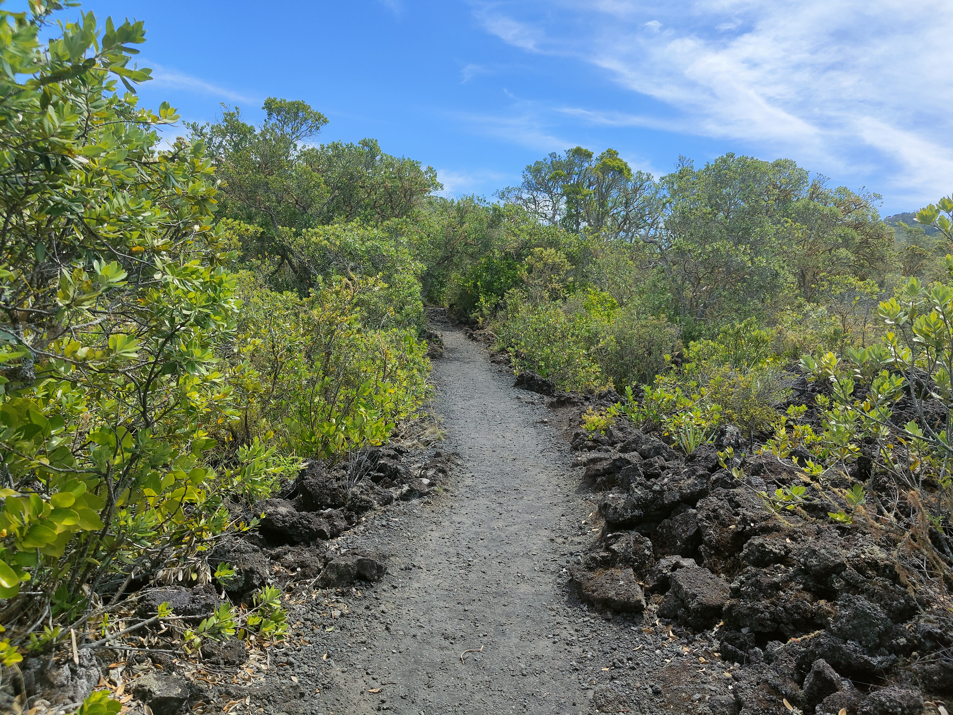 The path to the summit on Rangitoto Island