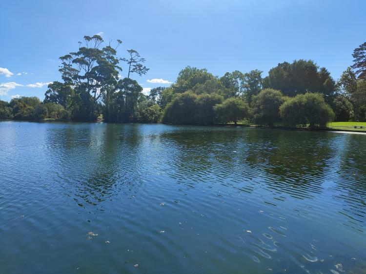 The lake in Western Springs Park