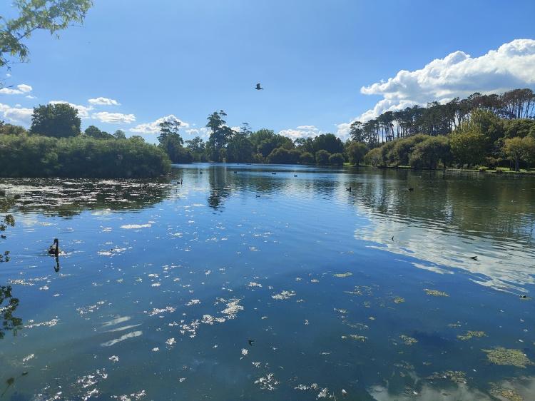 Looking across the lake in Western Springs Park