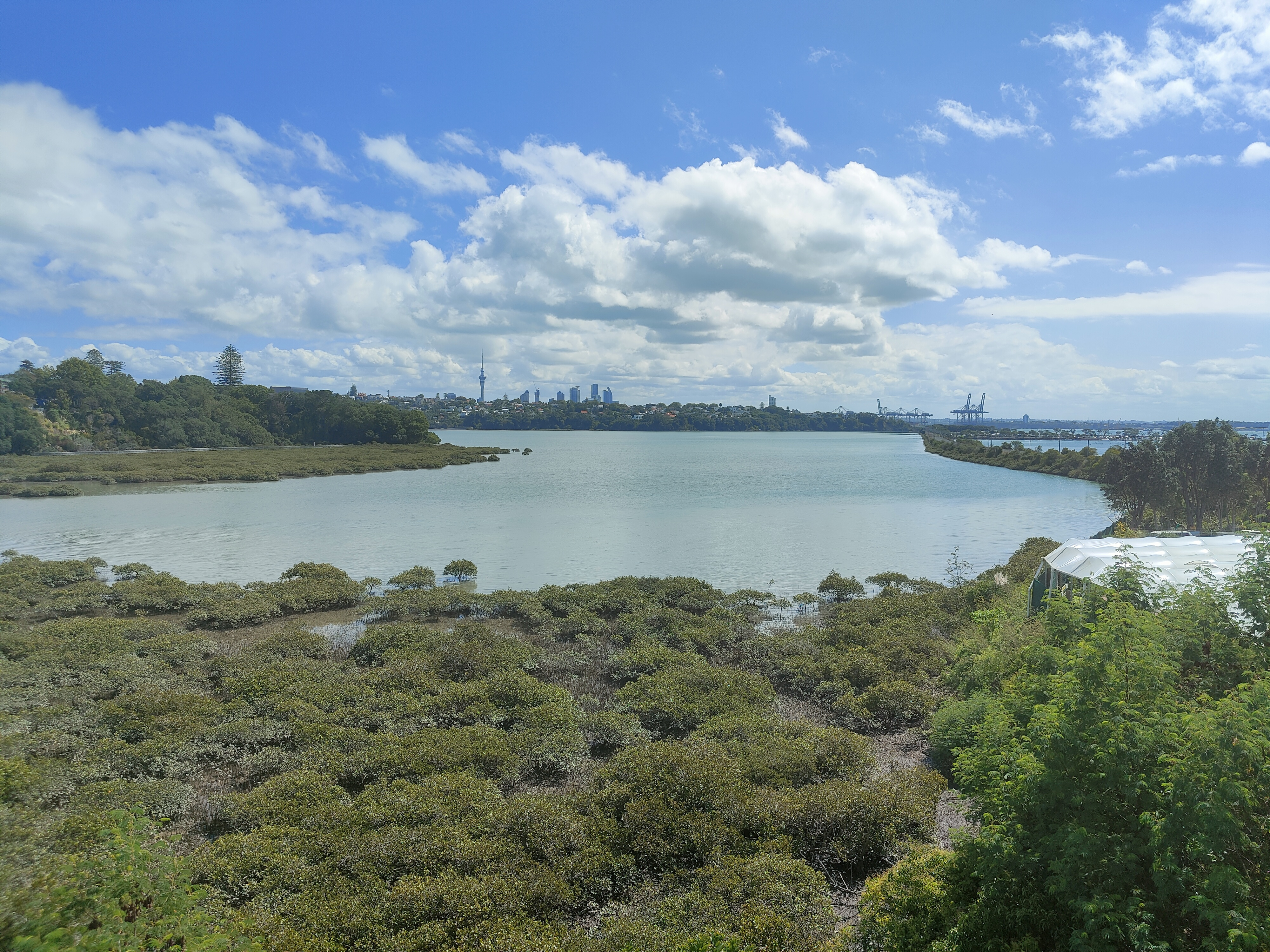 Looking to Auckland CBD across Hobson Bay